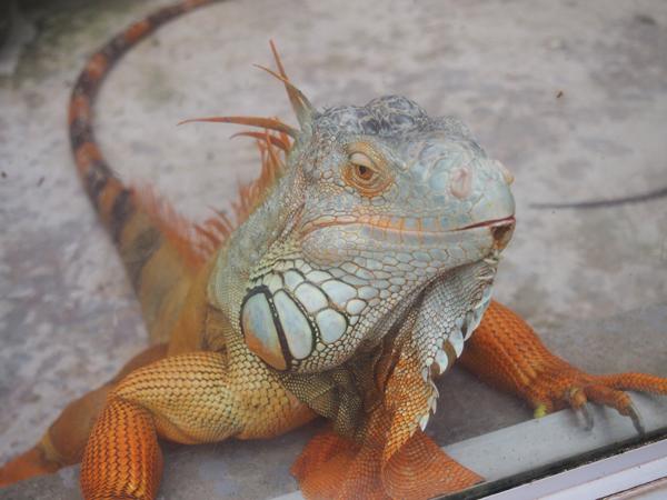 爬虫類コーナーにはヘビやトカゲが10種類ほど。