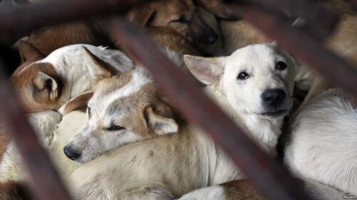 ベトナム人は「犬食」をどう思っているのか?保護活動から考える犬・猫との絆